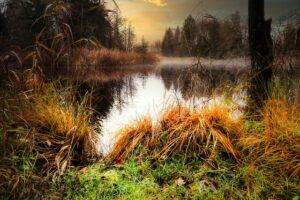 L'eau stagnante des marais