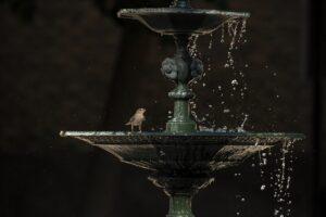 L'oiseau dans l'eau de la fontaine