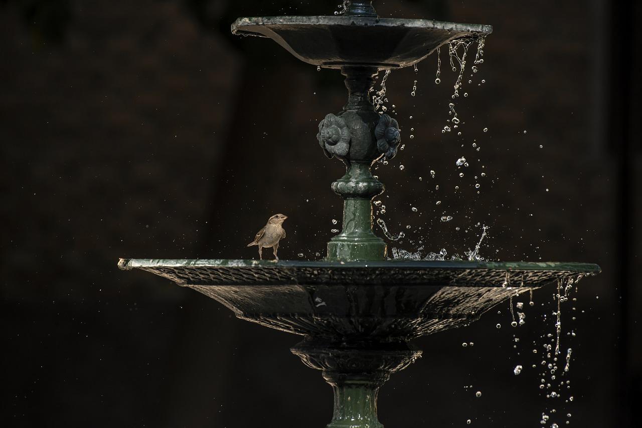 L'oiseau dans la fontaine