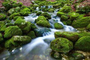 L'eau entre mousse et cailloux