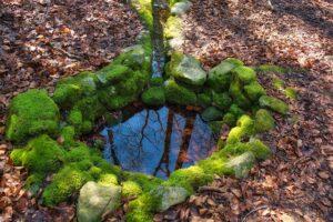 L'eau de fontaine en sous-bois
