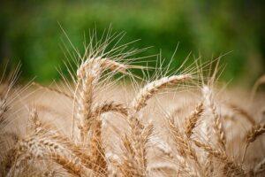 blé la cuisine sucrée